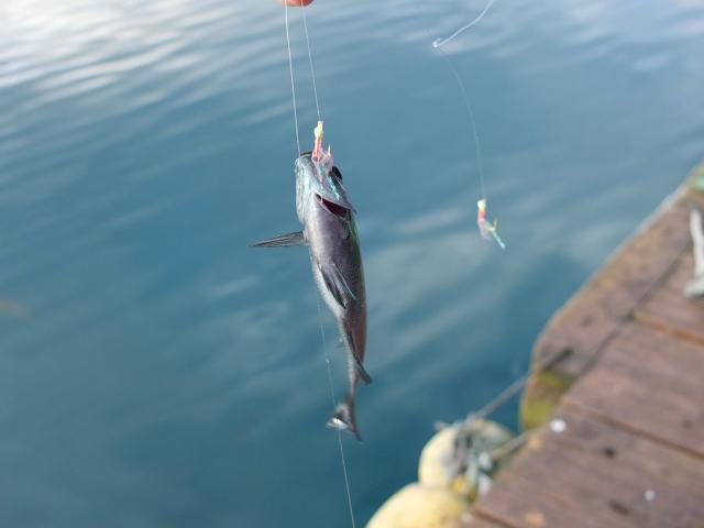 釣りの初心者に大人気!サビキ釣りの基本やポイントをご紹介