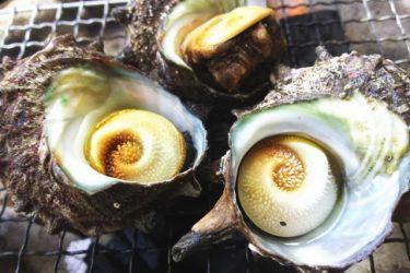 サザエの美味しい焼き方!海鮮バーベキューを楽しむ方法