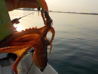 タコを釣りたい!タコ釣りに必要なタックル構成を教えて!