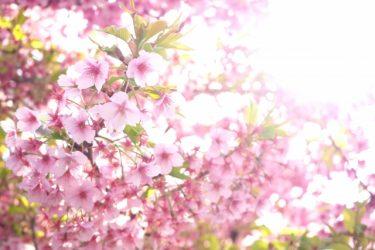 春ハイキングの魅力!桜が綺麗な関東のコースをご紹介!