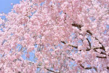 春ハイキングを楽しもう!桜咲く関西のコースをご紹介!