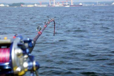 入手しやすく使いやすい釣り餌『イカ』!どんな魚が釣れる?